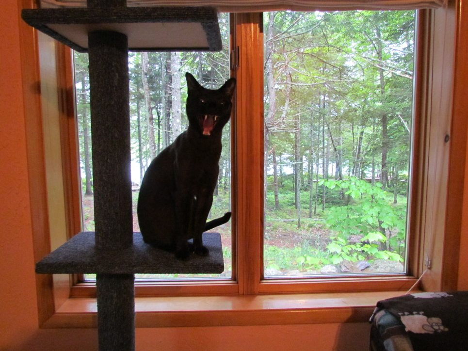 Jasper sitting in the cat tree facing the canoe dock, the boardwalk and the enchanted forest