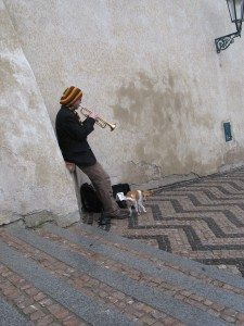 A Prague Castle Busker Dog