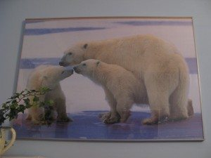 Polar bears in Alice apartment F