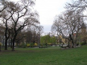 Charles Square Trees