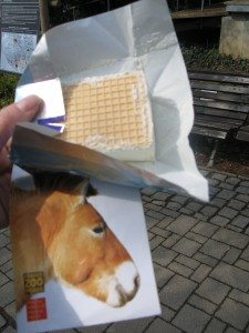Zoo Ice Cream Sandwich