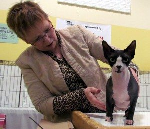 Christine Ling judging at the Riverview Cat Show