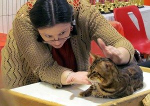 Eleanor MacDonald judging at the Riverview Cat Show