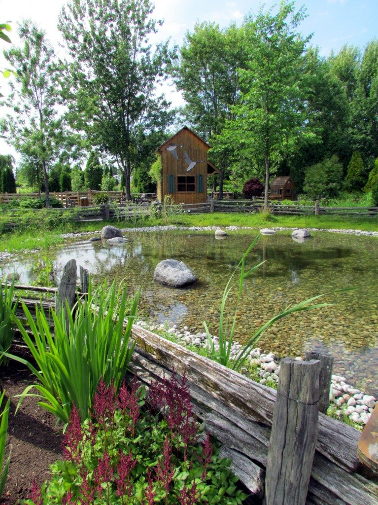The pond at Scullion Garden is amazing!