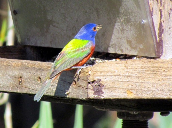 There was a couple of beautiful colored birds near the visitors center. What lovelies!!