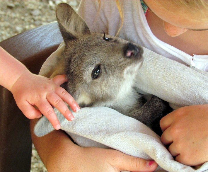 This little joey was so cozy in her plush little pouch and on her face was a big happy smile as the kids cuddled her.