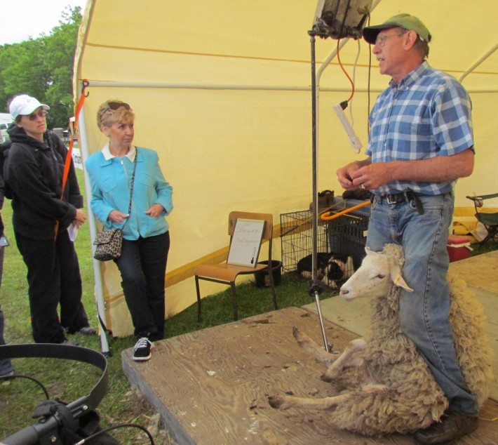 We saw a demonstration of the sheep shearing, and it was incredible to see how relaxed the sheep was as she was handled!