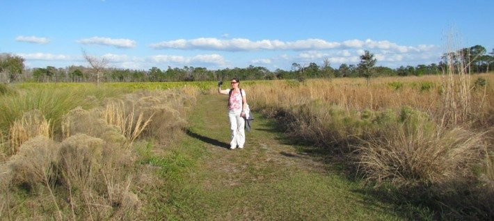Our walk at the Disney Nature Preserve near Kissimmee was super nice too bad we got there so late and din't have time to enjoy the entire loop trail.