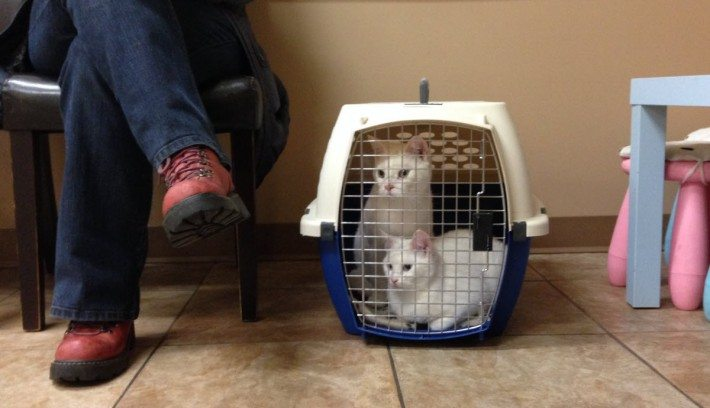 Our first visit to the Vet with Casper and Lily.