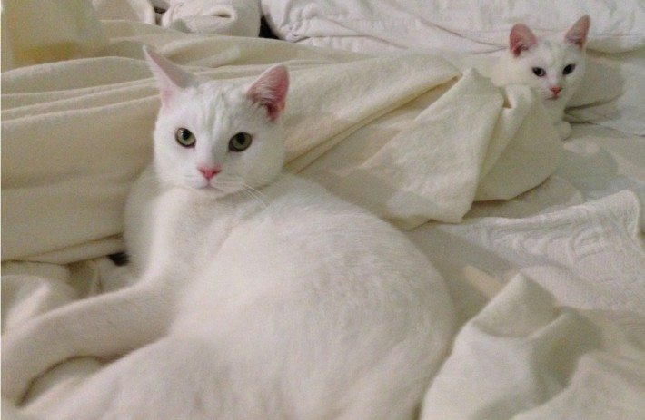 Casper & Lily enjoy the warm flannel sheets fresh from the dryer.