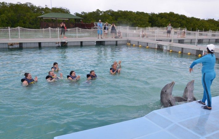 We were a small group in the pen with the dolphins and the trainer gave each of us quality time with the dolphins.