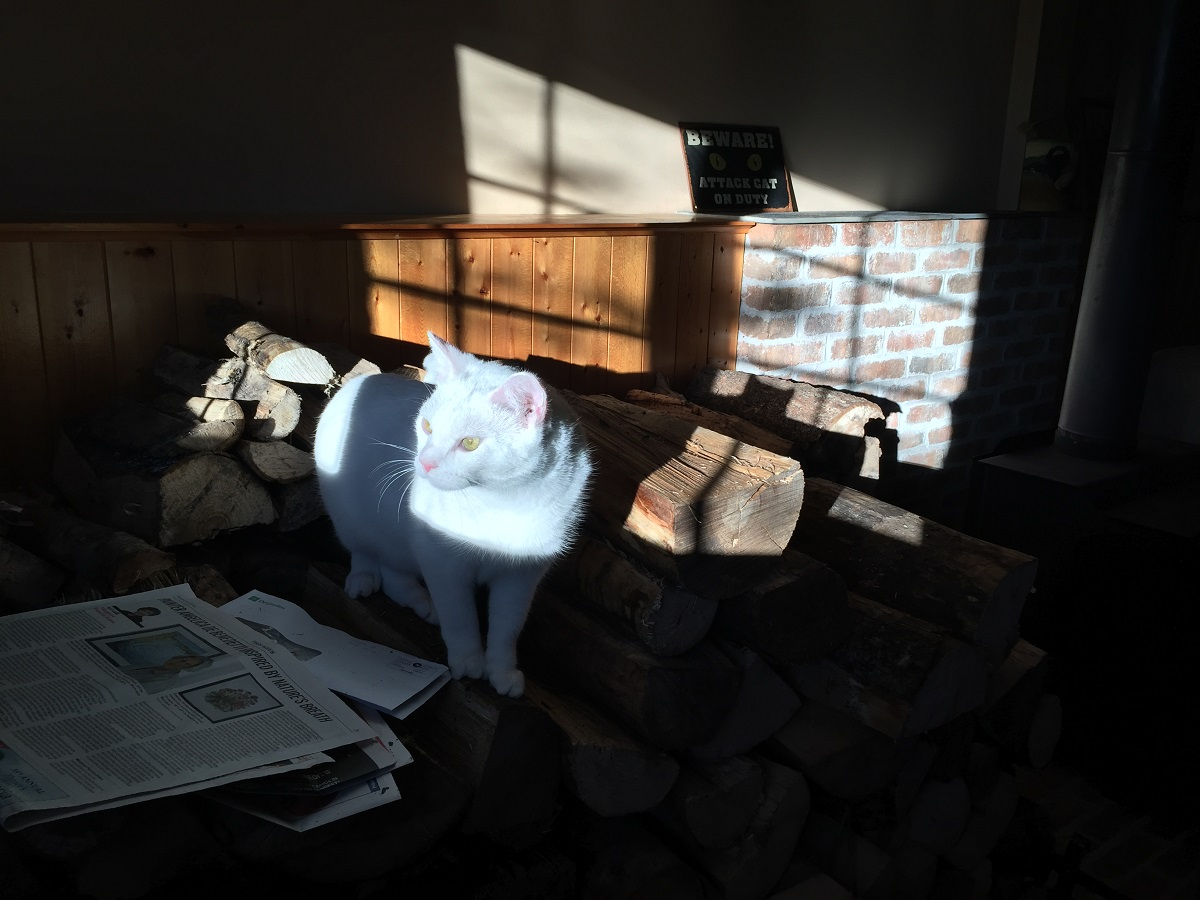 casper in the sun