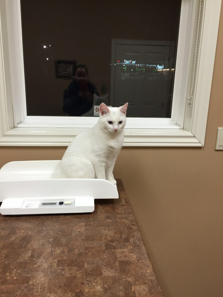 Lily at the vet dec 16-2015