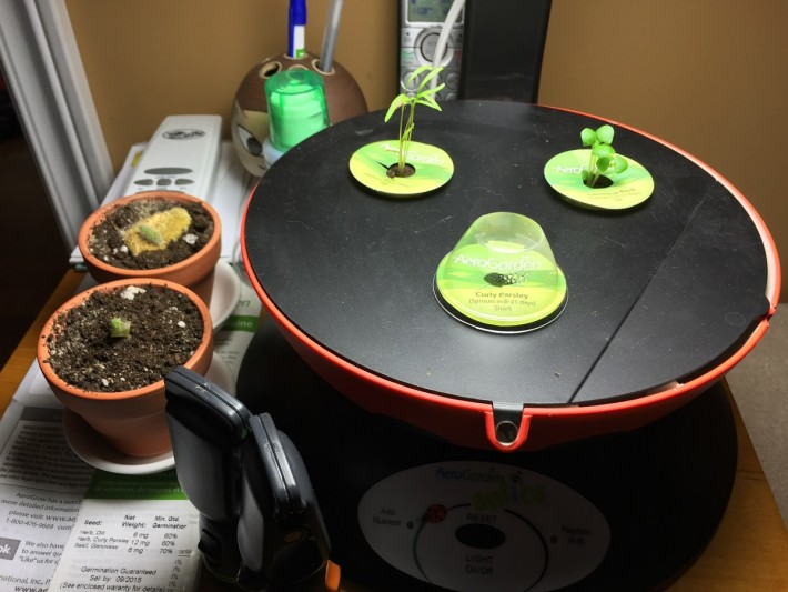 aerogarden 10 days dec 2015