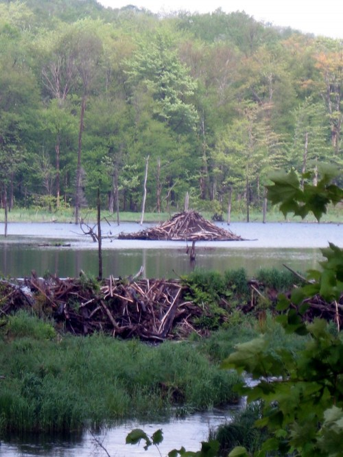 Beaver Lodge and Beaver Dam in Mount Orford Park
