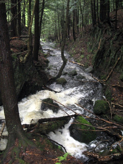 Mount Orford Park Stream