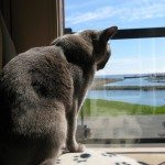 Alaska Enjoying the Ocean View of Super 8 in Caraquet