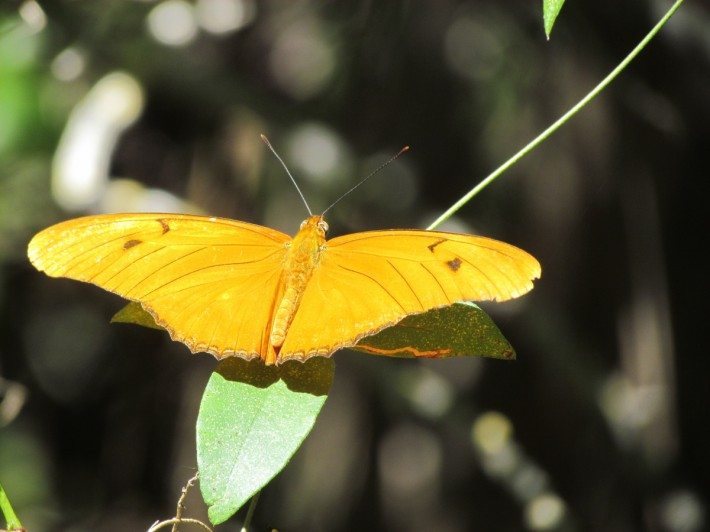Seeing a butterfly in February is wonderful! We'd never seen this lovely yellow butterfly before.