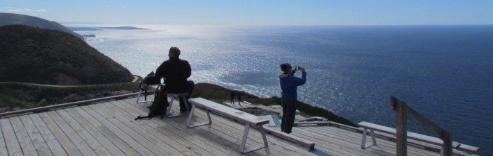 The boardwalk has benches to sit and take photos and enjoy the view of the Nova Scotia Coastline.