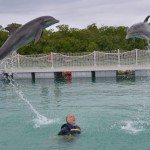 Swimming With Dolphins in Cayo Guillermo, Cuba