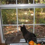 Alaska and Jasper looking out the window at Mersey River Chalets in Nova Scotia